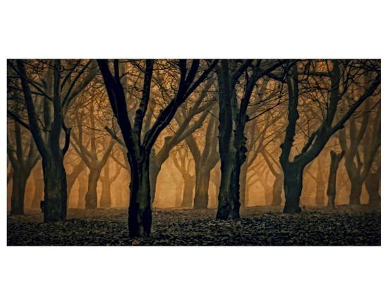 Schwartz - Woods Aglow-Don Schwartz-Art Print