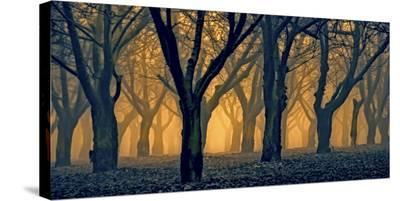 Schwartz - Woods Aglow-Don Schwartz-Stretched Canvas Print