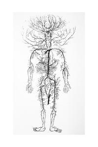 Arterial System, 18th Century by Science Photo Library