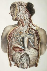 Autonomic Nerves, 1844 Artwork by Science Photo Library