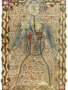 Circulatory System, 17th Century by Science Photo Library