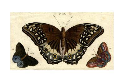 Scientific Illustrations of Butterflies and Insects--Art Print