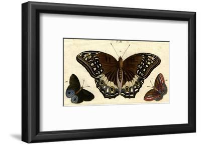 Scientific Illustrations of Butterflies and Insects