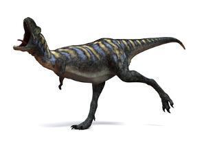 Aucasaurus Dinosaur, Artwork by SCIEPRO