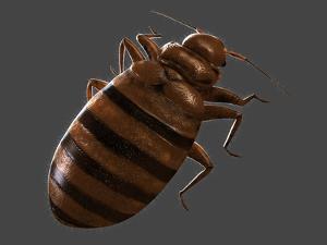 Bedbug, Artwork by SCIEPRO