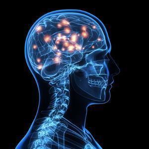 Brain Activity, Artwork by SCIEPRO