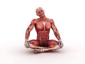 Male Muscles, Artwork by SCIEPRO