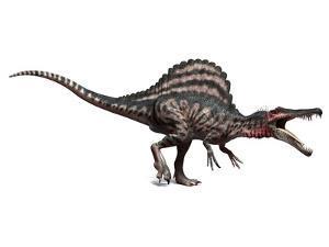Spinosaurus Dinosaur, Artwork by SCIEPRO