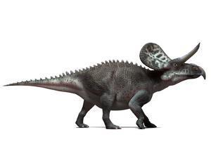 Zuniceratops Dinosaur, Artwork by SCIEPRO