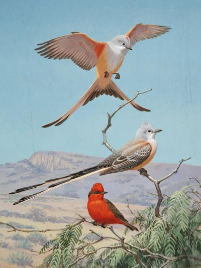 Scissor-Tailed and Vermilion Flycatchers Perch on a Mesquite Tree-Walter Weber-Photographic Print