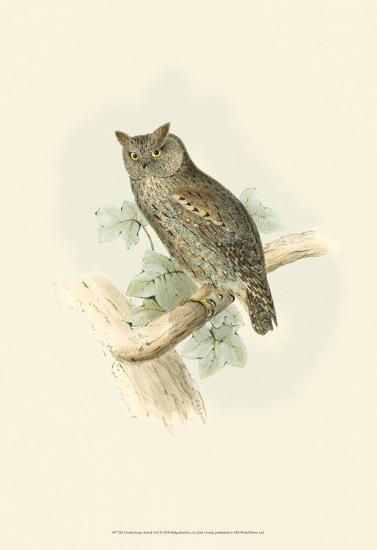 Scops-Eared Owl-John Gould-Art Print