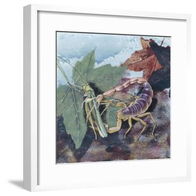 Scorpion (Scorpiones), Illustration