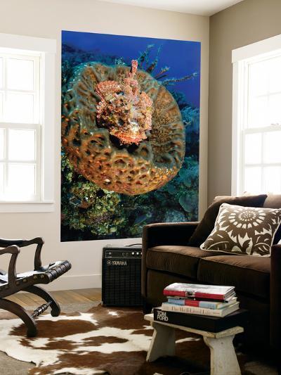 Scorpionfish Hiding in a Barrel Sponge-Stocktrek Images-Wall Mural