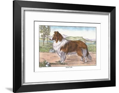 Scotch Collie--Framed Art Print