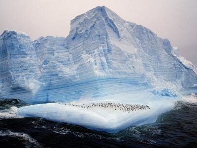 Scotia Sea, Chinstrap Penguins on Iceberg, Antarctica-Allan White-Photographic Print