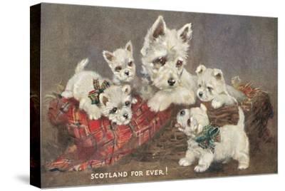 Scotland Forever, Westies
