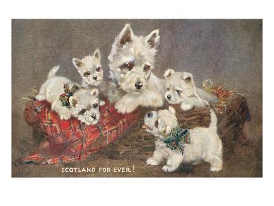 Scotland Forever, Westies--Art Print