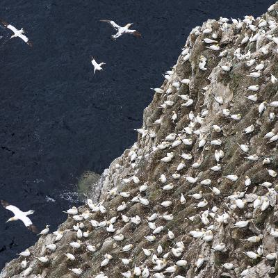 Scotland, Shetland Island-Martin Zwick-Photographic Print