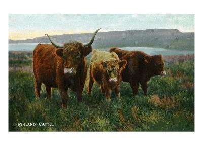 Scotland - View of Highland Cattle-Lantern Press-Art Print