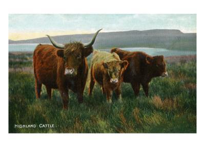 https://imgc.artprintimages.com/img/print/scotland-view-of-highland-cattle_u-l-q1goyt00.jpg?p=0