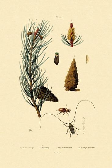Scots Pine, 1833-39--Giclee Print