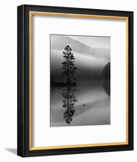 Scots Pine Tree Reflected in Lake at Dawn, Loch an Eilean, Scotland, UK-Pete Cairns-Framed Premium Photographic Print