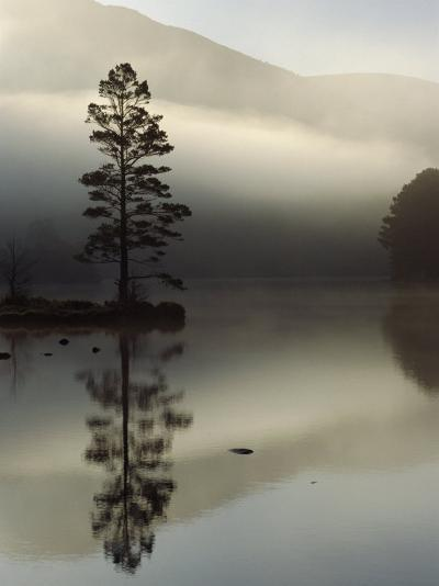 Scots Pine Tree Reflected in Lake at Dawn, Loch an Eilean, Scotland, UK-Pete Cairns-Photographic Print