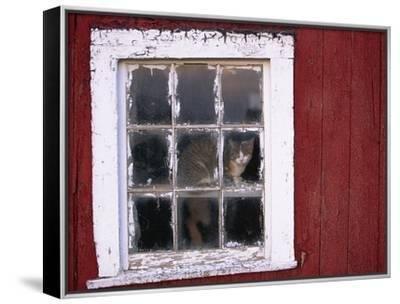 Cat sitting in a barn window