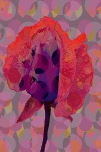 Tea Rose 3 by Scott J. Davis