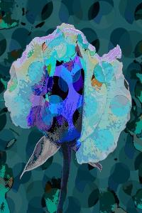 Tea Rose 5B by Scott J. Davis