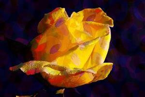 Yellow Rose by Scott J. Davis