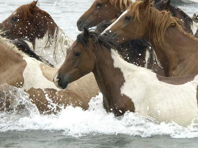Pony Swim by Scott Neville