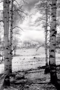 Aspen Vista by Scott Peck