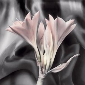 Clivia Pastel by Scott Peck