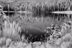 Diemer Lake by Scott Peck