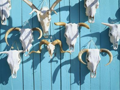 Animal Skulls for Sale, Taos, New Mexico, USA