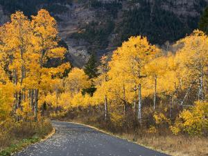 Aspen Trees on the Slopes of Mt. Timpanogos, Wasatch-Cache National Forest, Utah, USA by Scott T. Smith