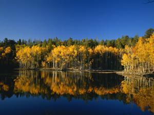 Autumn Trees Reflecting in Lake, Flatiron Lake, Dixie National Forest, Utah, USA by Scott T^ Smith