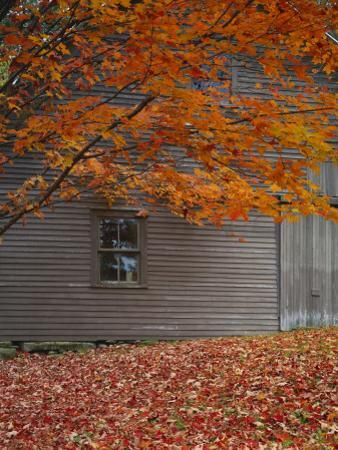 Barn and Maple Tree in Autumn, Vermont, USA