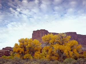 Canyonlands NP, Utah. Cottonwoods in Autumn Below Cliffs and Clouds by Scott T. Smith