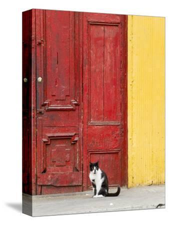 Cat and Colorful Doorway, Valparaiso, Chile