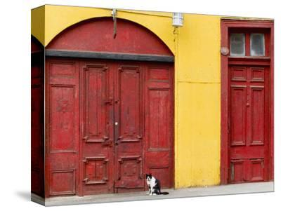Cat and Colorful Doorways, Valparaiso, Chile