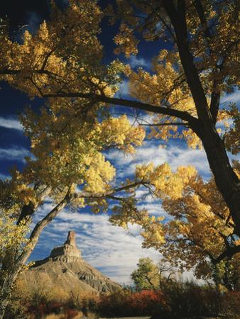 Cottonwoods and Squawbush, Gunnison Butte at Green River Flood Plain, Utah, USA