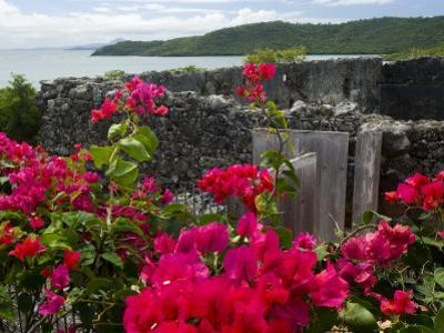 Flowering Bougainvillea & Ruins, Chateau Dubuc, Martinique, French Antilles, West Indies