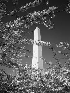 Monument with Cherry Blossom in Foreground, Washington DC, USA by Scott T^ Smith
