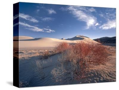 Nevada. Usa. Vegetation on Dunes Below Sand Mountain. Great Basin
