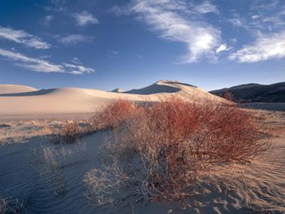 Nevada. Usa. Vegetation on Dunes Below Sand Mountain. Great Basin by Scott T. Smith