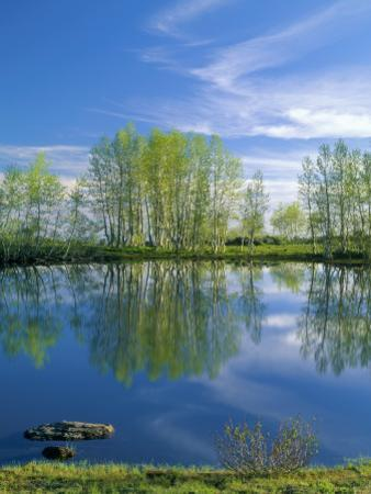 Pond Reflects Aspen & Cirrus Clouds at Sunrise on Steens Mountain, Oregon, USA by Scott T. Smith