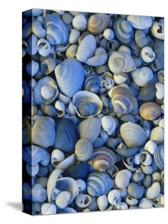 Shells of Freshwater Snails and Clams on Shore of Bear Lake, Utah, USA