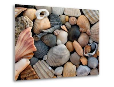 Shells on Edisto Beach, Edisto Beach State Park, South Carolina, USA